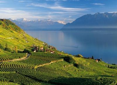 אזור היין lavaux