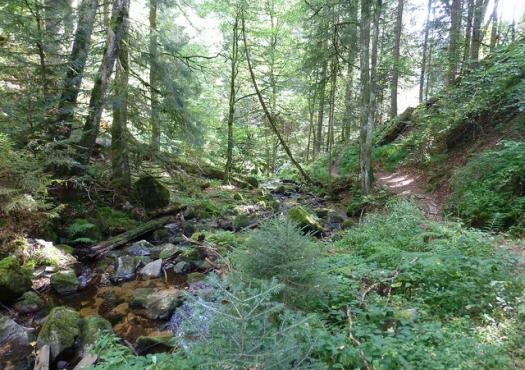 טיול הייקינג - הליכה ביער השחור