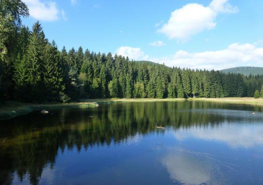 אגם שלוכזי (Shluchzi lake), בטיול ליער השחור
