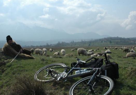 מנוחה ליד הצאן - רומניה