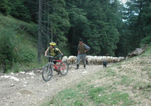 הרי הקרפטים ברומניה, טיול אופני שטח