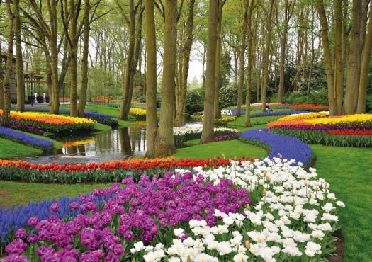 הפרחים של הולנד