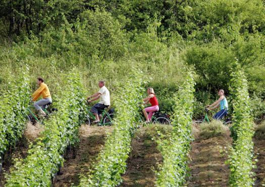 אופניים לאורך המוזל ב-7 ימים בנתיב היין מטרייר לקובלנץ