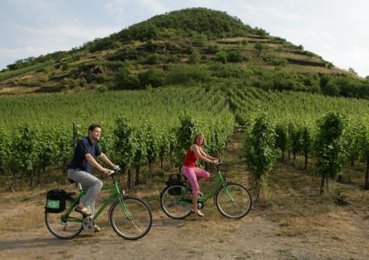 רוכבים בין היקבים בנתיב היין של המוזל