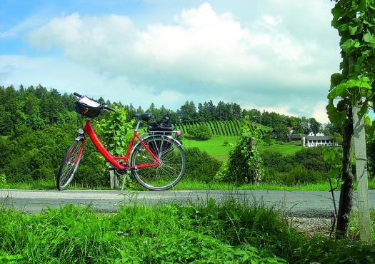 אופניים על נוף ירוק
